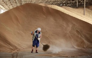 An employee sweeps up grains in a warehouse in the the village of Konstantinovo, some 60 km (37 miles) from the Southern Russian city of Stavropol June 7, 2011. Russia's decision to lift its grain export ban from July could put some downward pressure on market prices but with an uncertain crop outlook in the United States and in major EU producers, it said international prices are expected to remain volatile. REUTERS/Eduard Korniyenko (RUSSIA - Tags: AGRICULTURE FOOD BUSINESS)